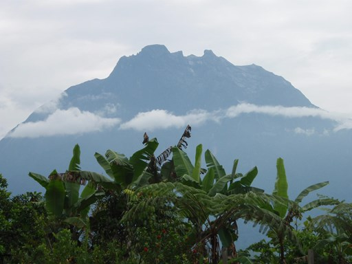 Mount Kinabalu_view to peak across forest and clouds.jpg