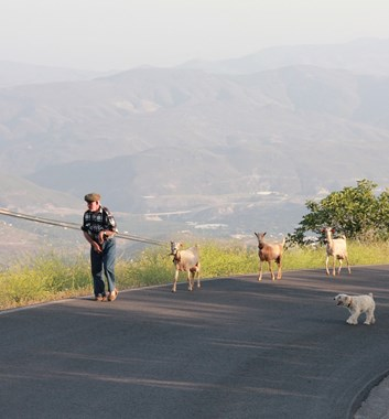 Goats on the road near Mairena village.