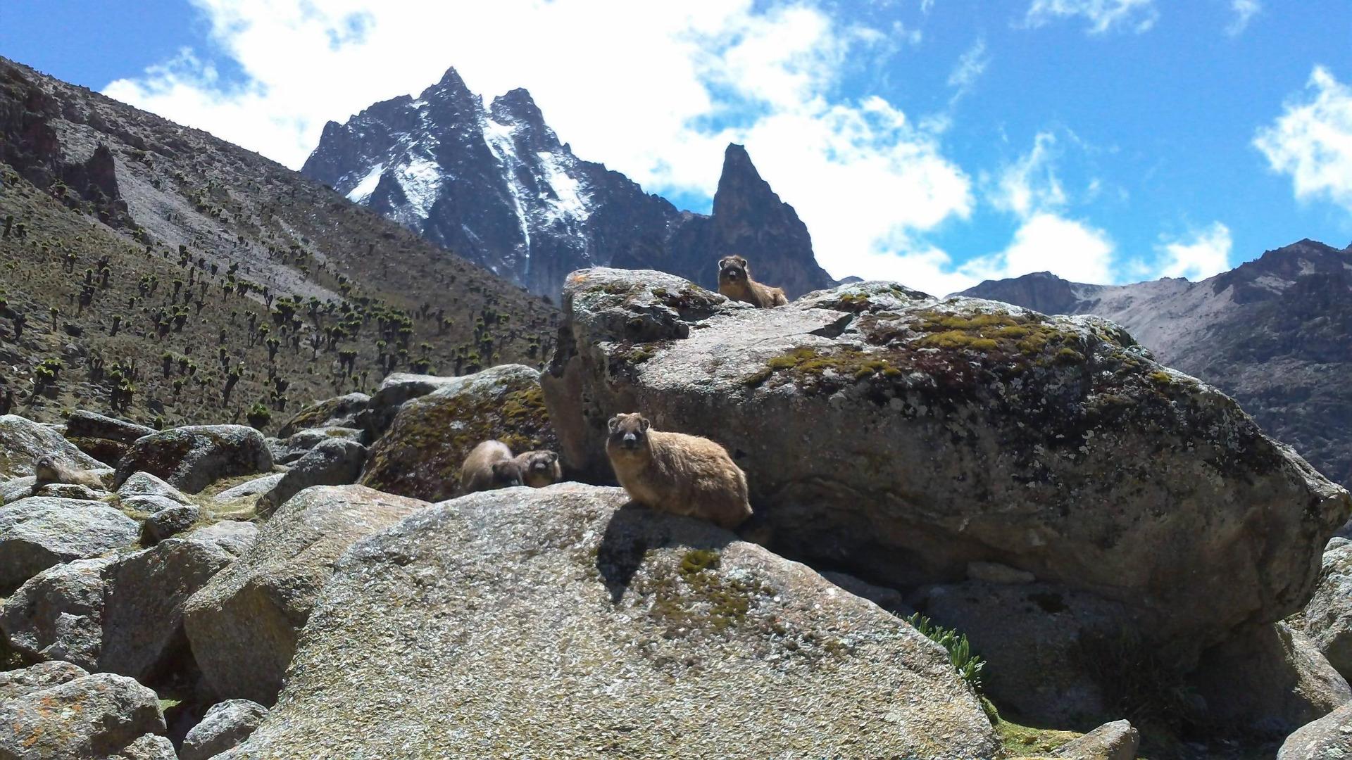Mount Kenya Climbing Nelion-Batian - Go To Mount Kenya climbing ...