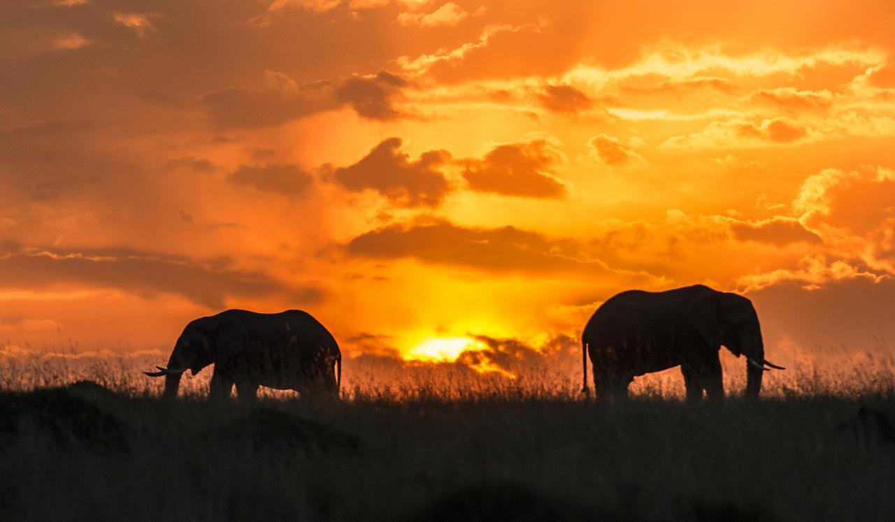 masai mara safari adventure alternative expeditions