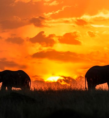 Kenya Safari - Elephants at sunset