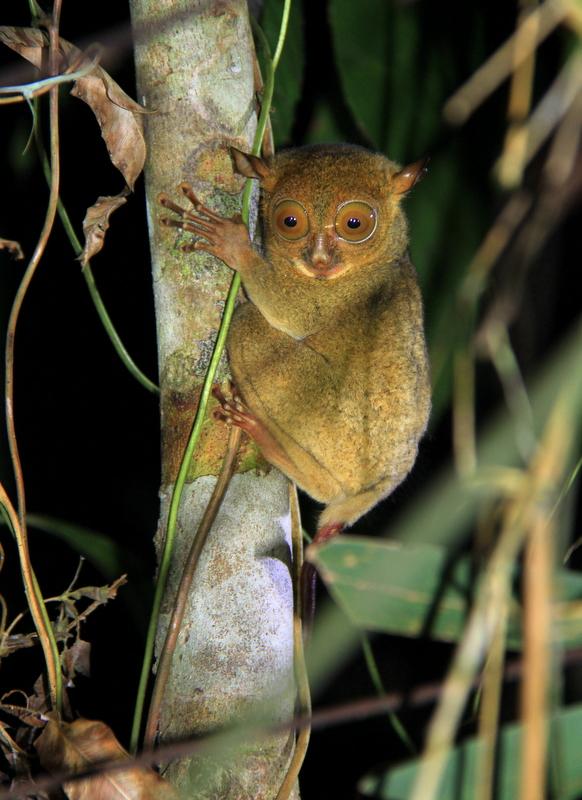 Borneo Wildlife Amp Orangutan Tour 2019 20 Adventure
