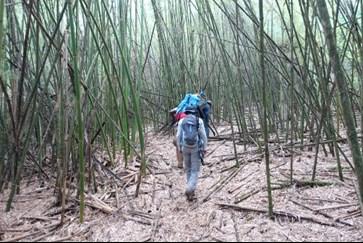burguret_route_bamboo_forest.jpg